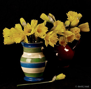 broken jugs and daffodils