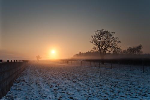 morning trees winter sun mist cold tree rural sunrise miltonkeynes behing