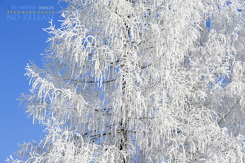 beautiful Winter tree nature ► All kinds of commercial usage are illegal ! Copyright 2011 B. Egger :: eu-moto images not released 7107
