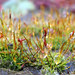 Miracle of Nature - Microcosm Moss