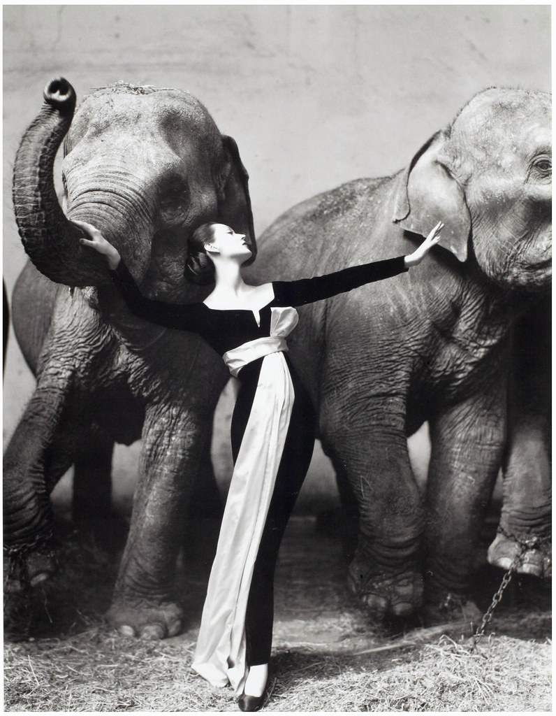 Dovima by Richard Avedon — wears Dior by Yves Saint Laurent, 1950