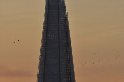 Flock and Shard