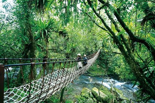 纜繩吊橋巴尬橋。(圖片來源:羅東林管處)