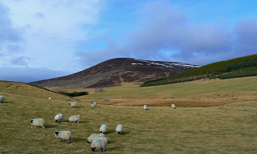 Sheep and Carn Ealasaid