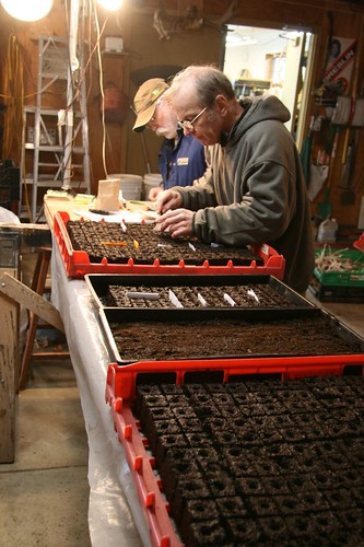 seeding soil blocks