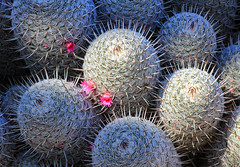 A Pretty Prickly Passion