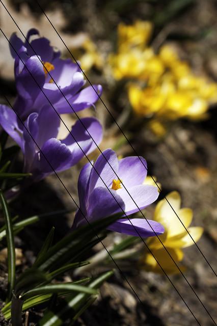 diagona;flowersdiagonal