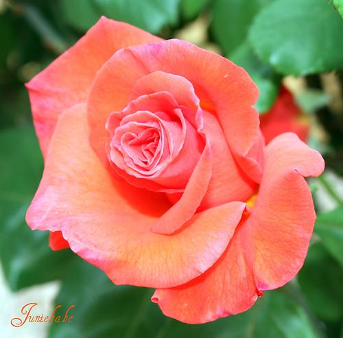 Rosie red!!!
