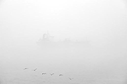 Fog and Pelicans, 3/12