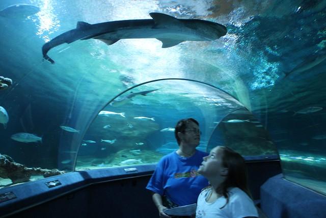 Shark above! at National Aquarium of New Zealand at Napier? Flickr ...