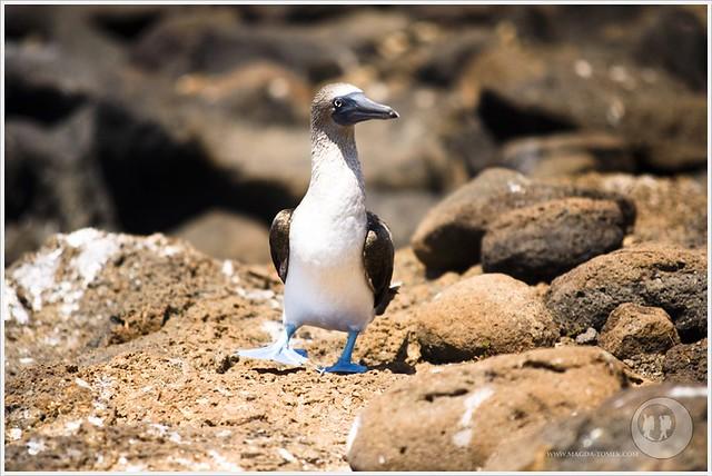 2012 03 19_Magda i Tomek Dookola Swiata_Galapagos_DSC_0189