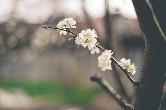 Spring Time 14