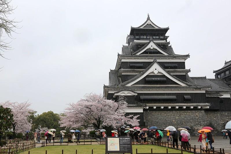 熊本城X櫻花雨