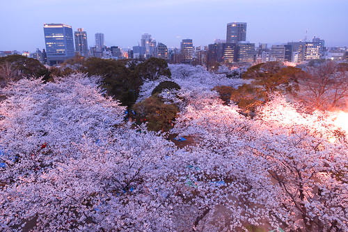 Sakura Festival 2014 at Night