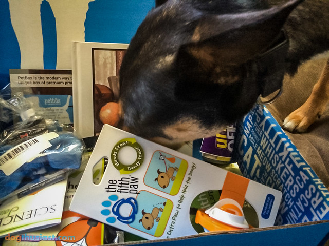Mort rummaging around the contents of the Petbox he received.