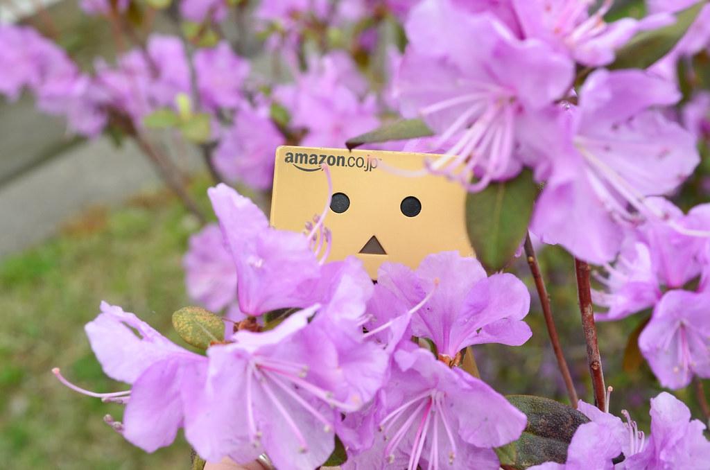 お花見ダンボー。 (1)