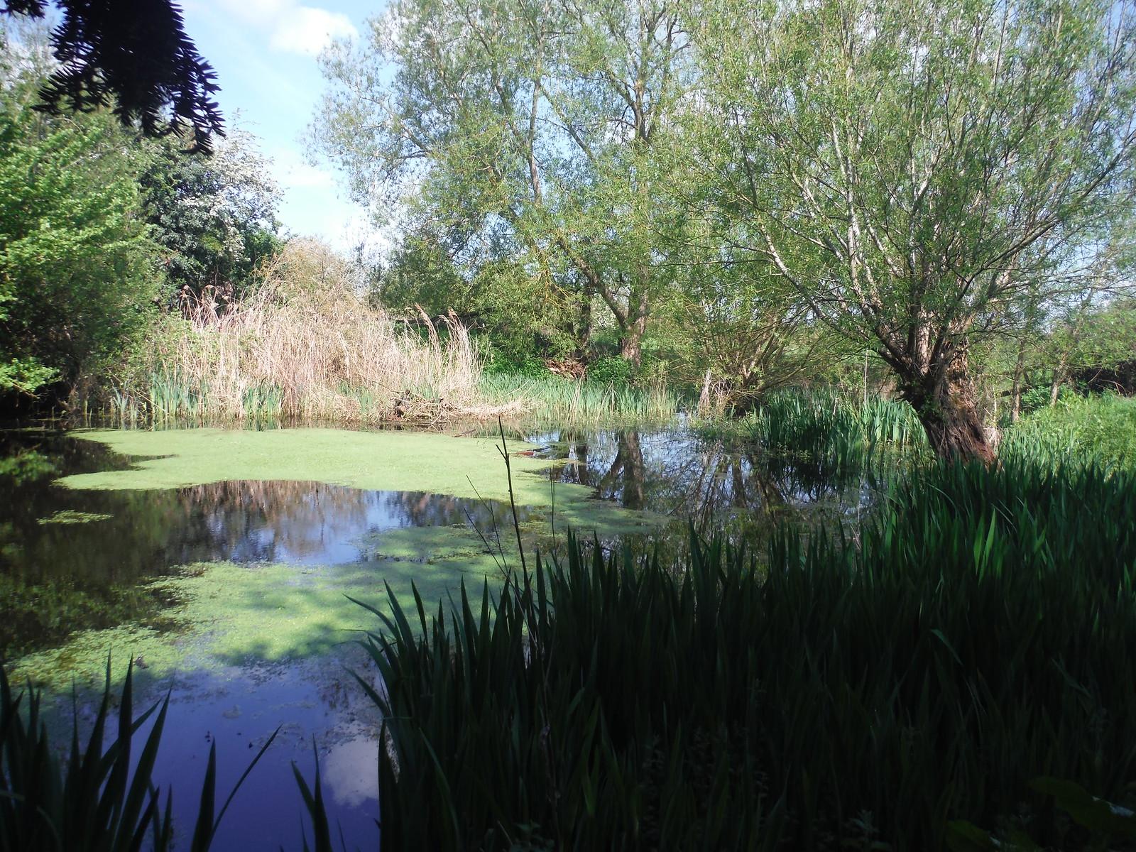 Pond in Moreton SWC Walk 190 - Thame Circular