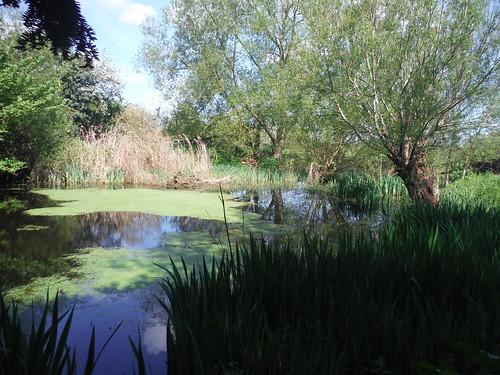 Pond in Moreton