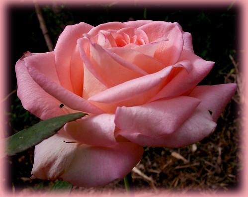 Hoje  as flores são para mim!!!! by coisasdamoise (Alair)