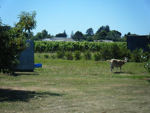 NZ 2012 115