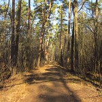 Kafertaler Wald VII KAFERTAL FOREST VII Mannheim DE