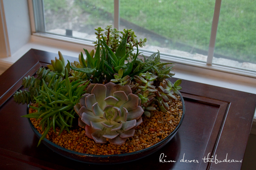 finished succulent dish garden i m very happy with it