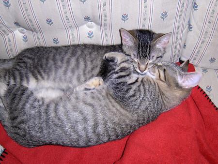 kitten-hug-lrg