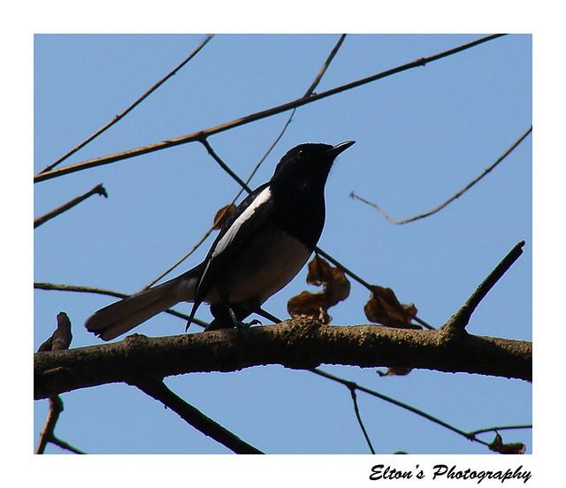 The Mystery Birds