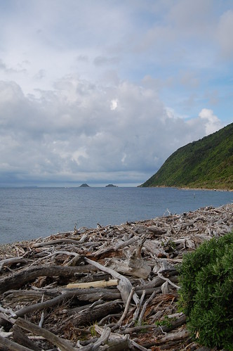 Driftwood beach on Kapiti Island