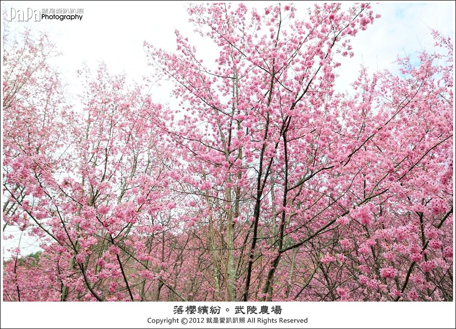 Wuling_0127