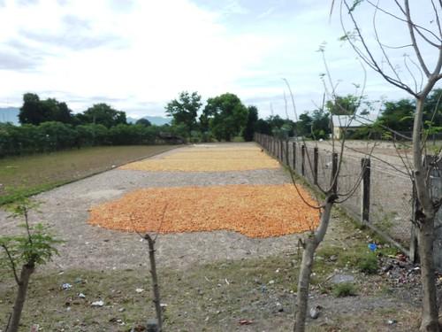 Luzon-Vigan-San Fernando (1)