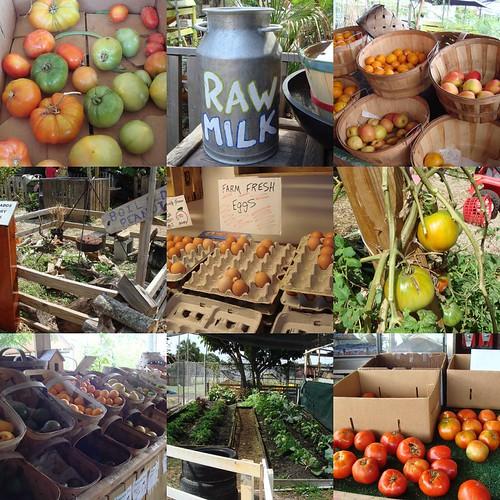 Scenes From Marando Farms