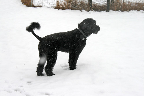 skippy in the snow 006
