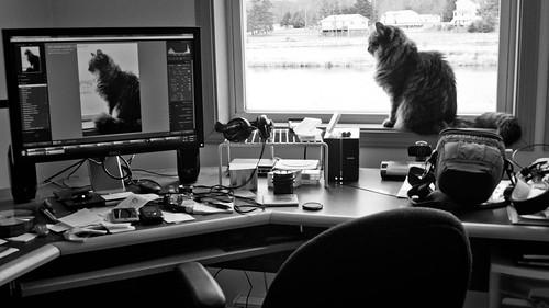 Cat Picture | 28 | 2.8 | #12