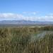 Bay-Trail-Sunnyvale-Baylands-2012-03-06