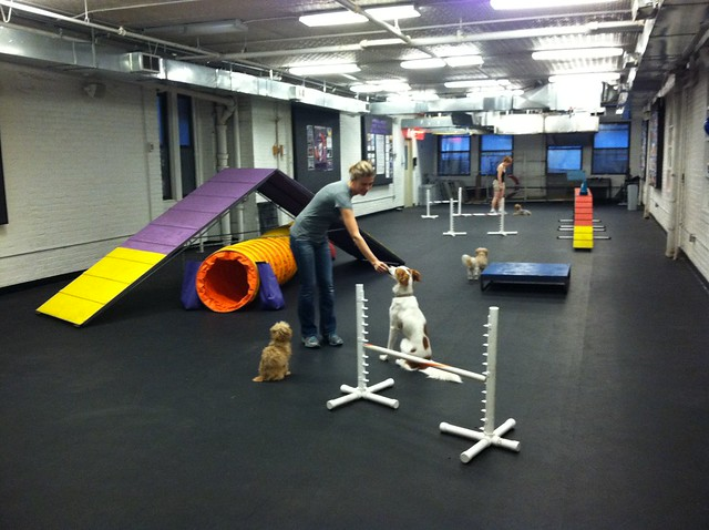 Dog Agility Training Rockwall Tx