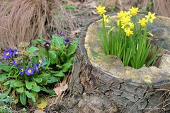 Cornish Spring by Stocker Images