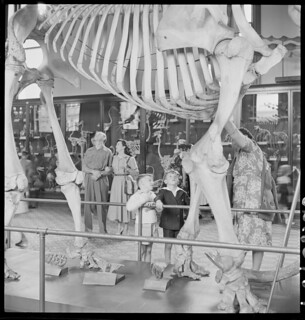 Australian Museum, March 1950, from Series 02: Sydney people & streets, 1948-1950, photographed by Brian Bird
