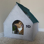 Feather Your Nest ENTRY - Spike and Pumpkin's Cat House