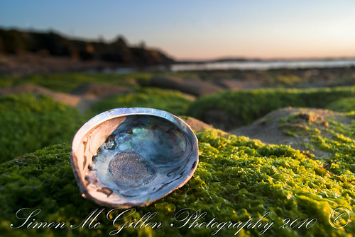 ocean sun seascape beach sunrise landscape shell shore colourful kakanui pauashell