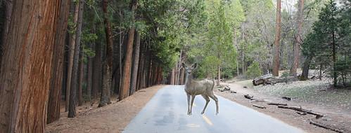 Deer in Headlights image