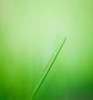 ~ Variations on a Theme of Grass ~