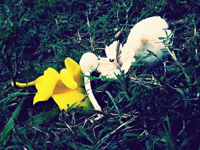 Flores e cogumelos