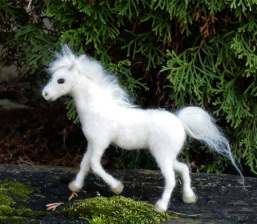 Baby white horse