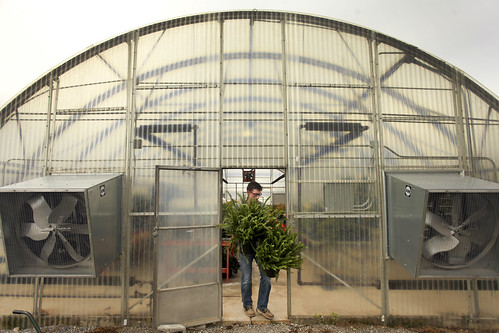 MG_Hahn_Hort_greenhouse