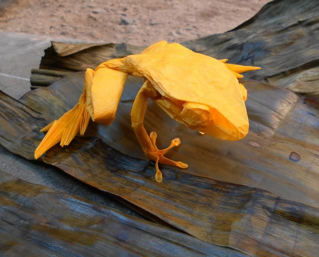 Poison Dart Frog - Robert Lang