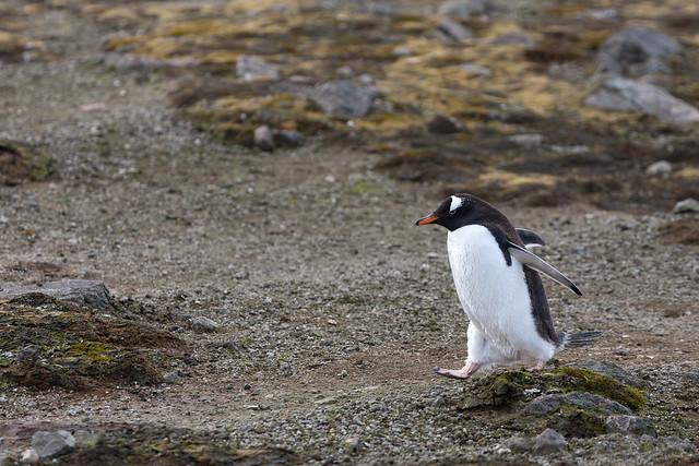 20120127_203008_MKN_9898_AntarcticDream_AitchoIsland