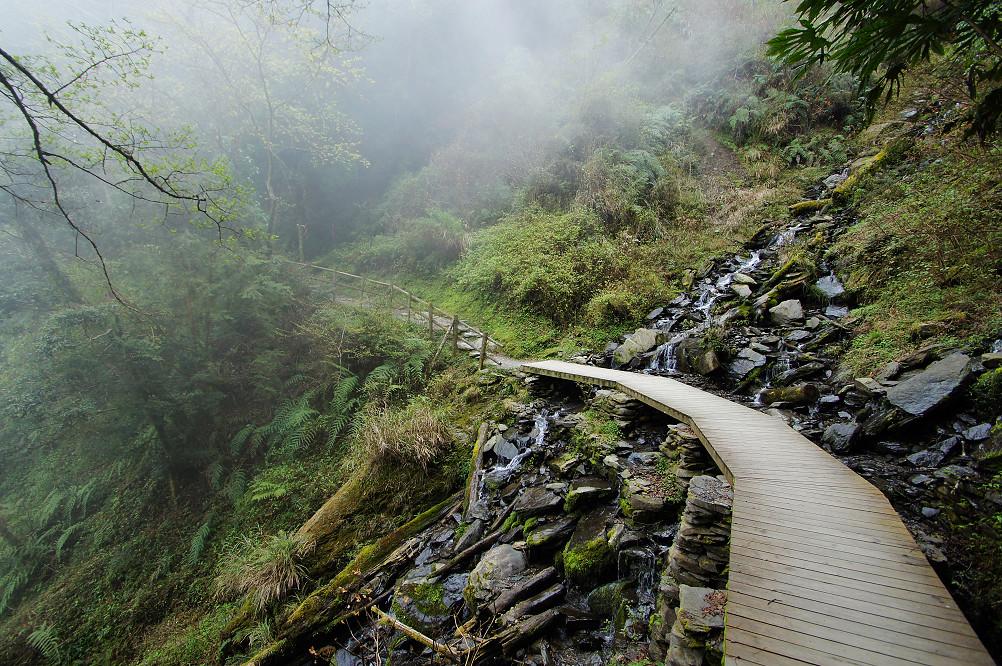 觀霧巨木步道-033