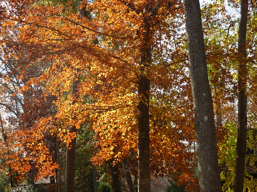 Fall leaves 4 by alana sise