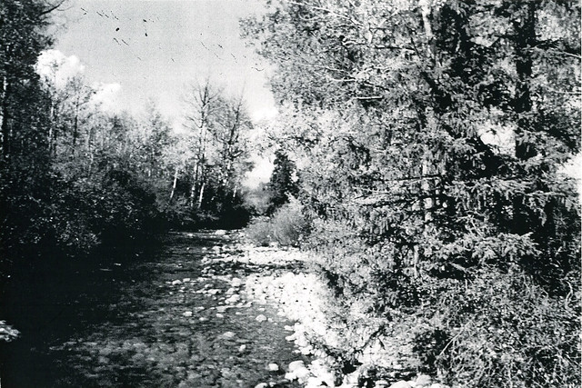 Teton Creek Upstream